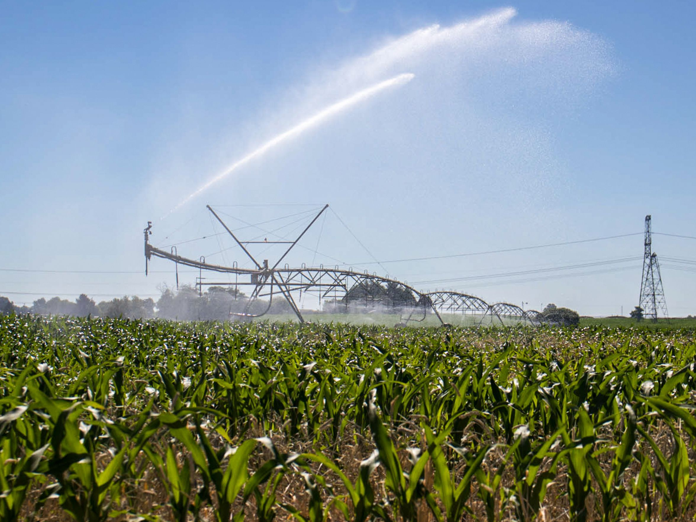 A central pivot irrigation system waters a corn field